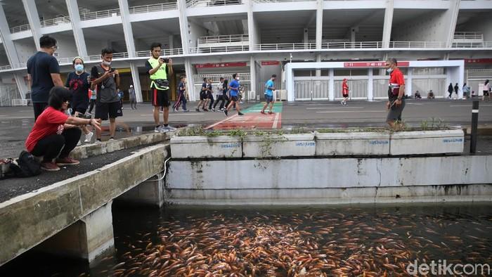 Saluran air yang ada di kawasan lingkar luar Stadion Utama Gelora Bung Karno dipenuhi ikan. Warga pun antusias memberi makan ikan-ikan tersebut.
