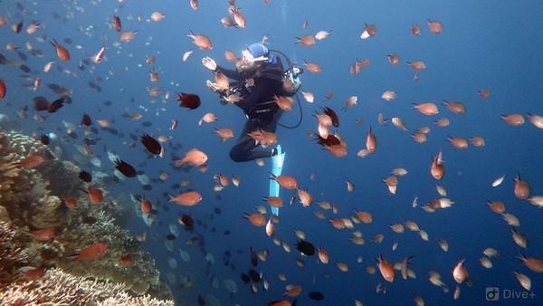Taman nasional warisan dunia UNESCO ini, menawarkan keindahan bawah laut dan memiliki biodiversitas laut tertinggi dunia. Dok.UNESCO