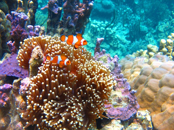 Pesona bawah laut Cagar Biosfer Karimunjawa-Jepara-Muria. Cagar ini terletak di Jawa Tengah terletak di wilayah pegunungan yang mengelilingi Gunung Muria.