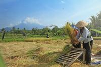 Cagar Merapi Merbabu Menoreh. Tipe hutan pegunungan Jawa-Bali di lokasi tersebut melindungi keanekaragaman hayati di wilayah Indo / Malaya serta formasi batu kapur di wilayah Menorah.