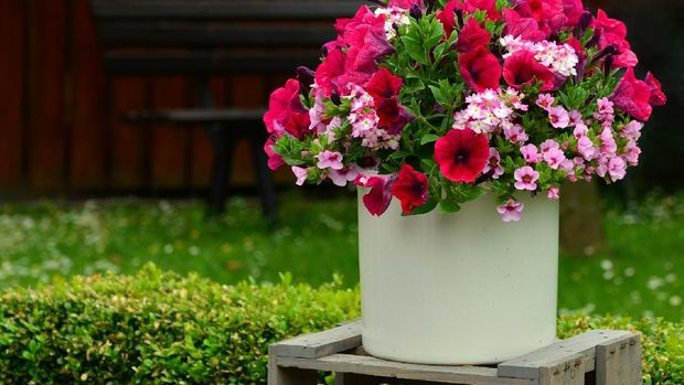 Petunia (Image by congerdesign from Pixabay)