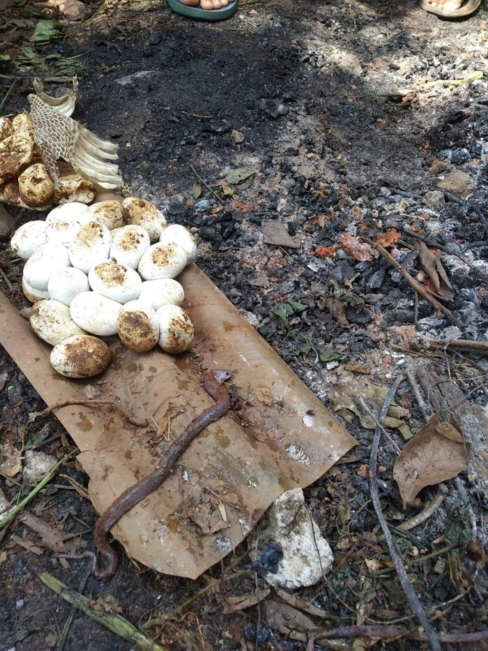 Puluhan telur ular ditemukan di gudang sebuah rumah warga Bekasi (Dok. Istimewa)