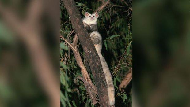 2 Spesies Baru Ditemukan di Australia