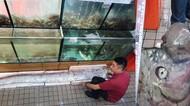 Disebut Mirip Alien, Ikan Seberat 45 Kg Ini Harganya Rp 7,8 Juta