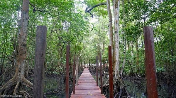 Ada juga Wisata Mangrove di Muara Badak. Jangan kaget jika bisa menemukan populasi bekantan di hutan mangrove yang masih alami ini (Edelweiss Blogger/dTraveler)