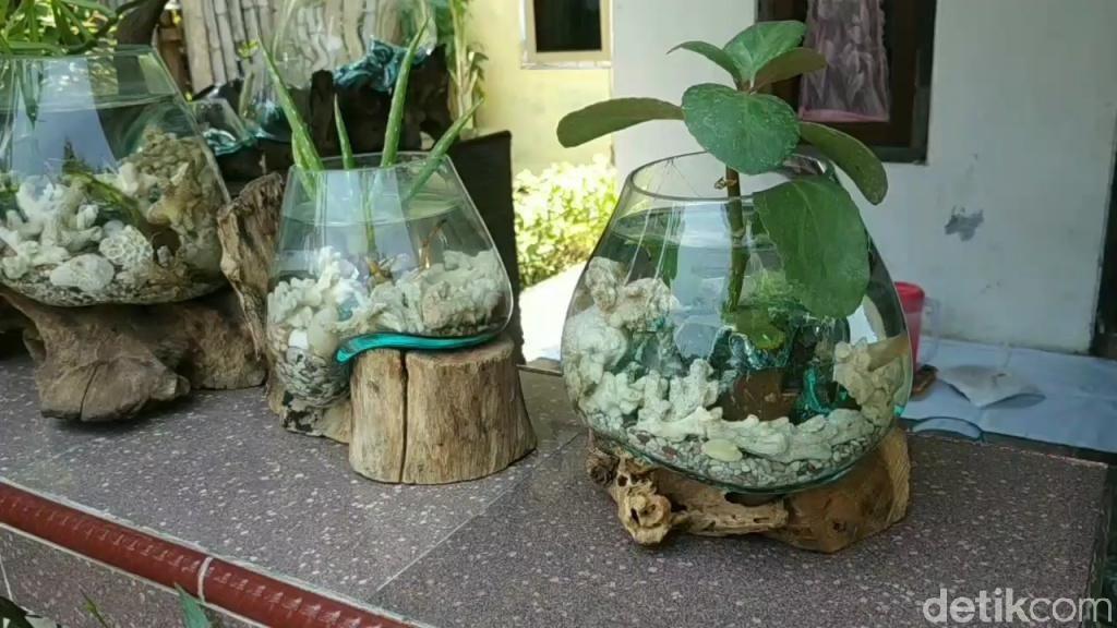 Cantiknya Akuarium Mini Beralas Akar Kayu Karya Warga Pasuruan