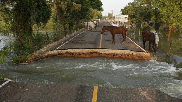 Horses stand on a road severed by floodwaters in Tepetitan, Mexico, Tuesday, Nov. 10, 2020. Flooding has affected thousands in the Gulf coast state of Tabasco. The native state of Mexico's President Andrés Manuel López Obrador has been under water for days, sending nearly 10,000 people to shelters and killing at least five. (AP Photo/Felix Marquez)