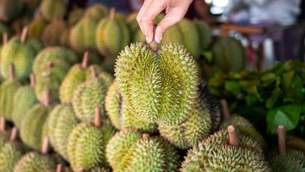 Musim durian juga dinikmati warga Desa Bonto Manai, Kecamatan Parugu, Kabupaten Bulukumba, Sulawesi Selatan. Mereka punya kebun durian yang letaknya di dalam hutan. Dari Makassar ke sini butuh waktu 5 jam. (Getty Images/iStockphoto/Darwel)