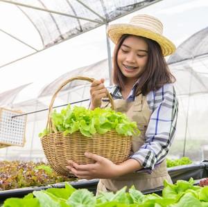 Cara Menanam Sayur Hidroponik di Rumah, Bisa Hemat Uang Belanja