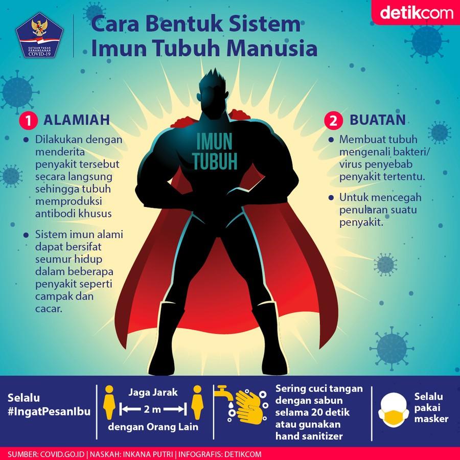 Membentuk sistem imun tubuh
