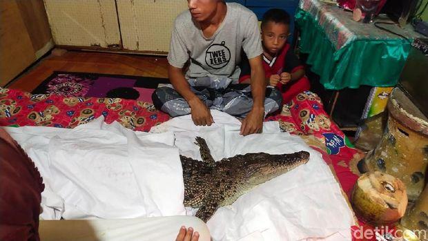 Buaya diyakni warga di Makassar sebagai keturunan manusia