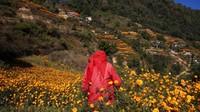 Seperti diketahui, marigold jadi salah satu bunga yang kerap terlihat di berbagai perayaan maupun festival yang digelar di Nepal.