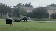 Ngeri! Buaya Raksasa Kuasai Lapangan Golf di Florida