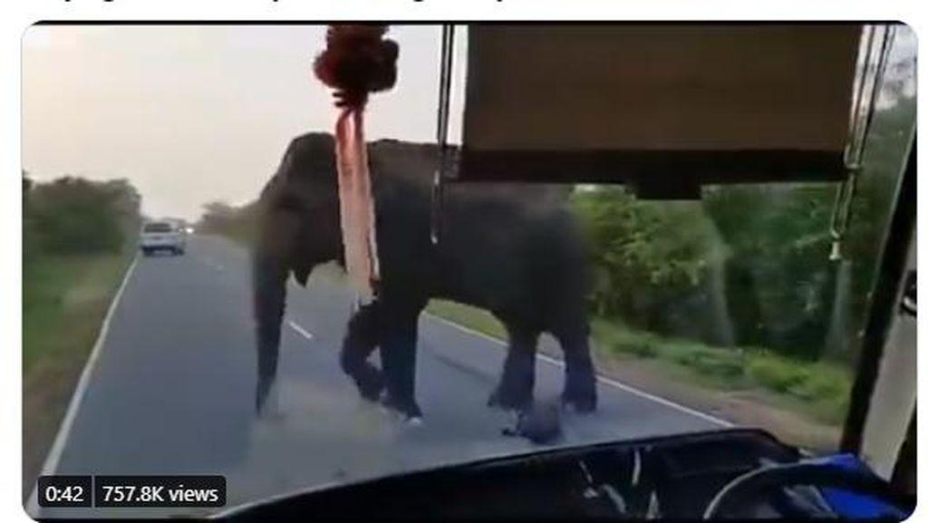 Ngeri! Gajah Ini Terobos Masuk Bus Demi Ambil Pisang