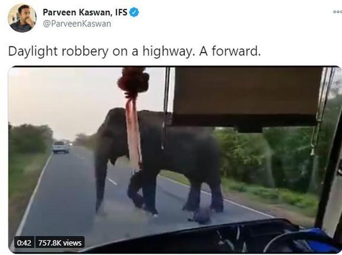 Gajah Curi Pisang