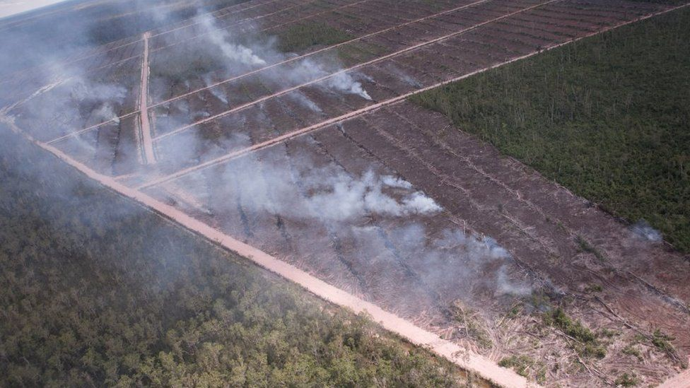 Papua: Investigasi ungkap perusahaan Korsel 'sengaja' membakar lahan untuk perluasan lahan sawit