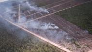 Protes Netizen soal Dugaan Perusahaan Korsel Bakar Hutan Papua