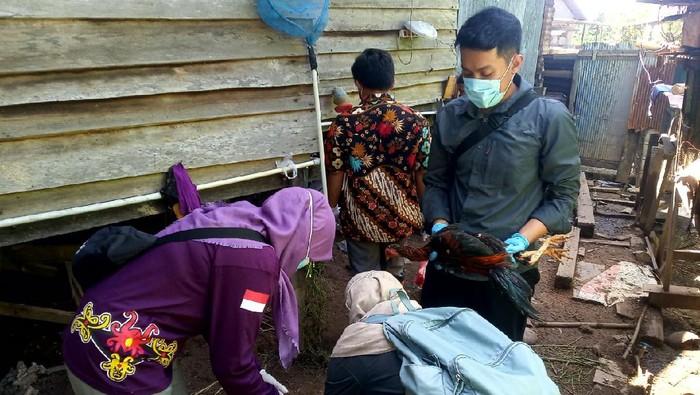 Puskeswan Kota Bontang lakukan sterilisasi dan rapid test ke ungas milik warga