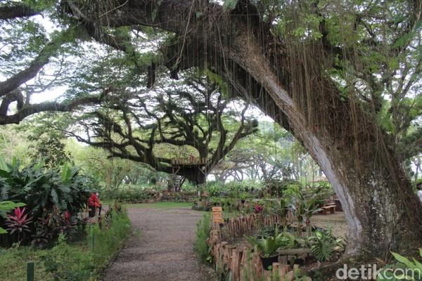 Destinasi alam Hutan De Djawatanterdapat 805 pohon trembesi berusia 100 sampai 150 tahun.