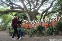Banyuwangi menyuguhkan beberapa destinasi wisata alam. Salah satunya hutan De Djawatan.