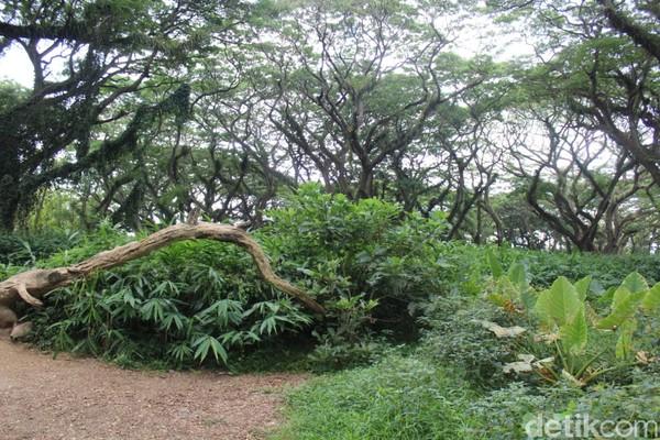 Saat berada di hutan De Djawatan, wisatawan akan diingatkan dengan hutan Fangorn yang ada di dalam film The Lord of The Ring.