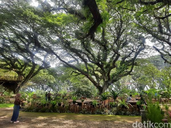 Hutan De Djawatan pernah menjadi tempat perlintasan kereta api. Di era penjajagan Belanda juga sempat dimanfaatkan sebagai tempat penimbunan pohon jati.