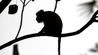 4 Fakta Kasus Pertama Virus Monkey B di China yang Berakhir Tewas