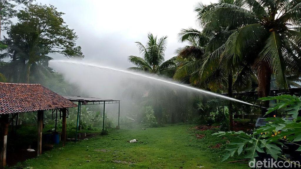 Pestisida hingga Water Canon Halau Serangan Semut di Banyumas