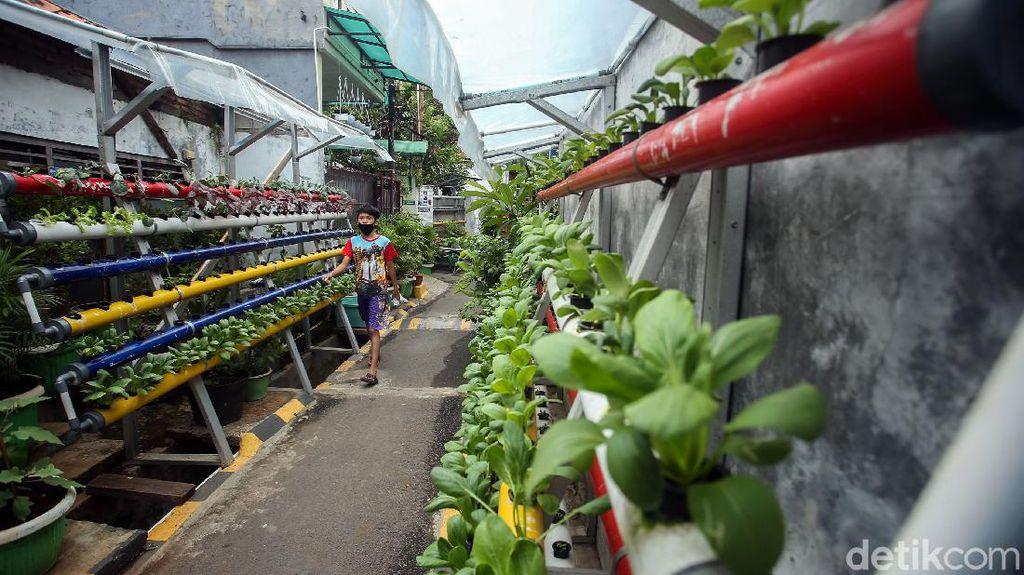 Menilik Kampung Sehat di Utan Kayu yang Bikin Mata Terpana