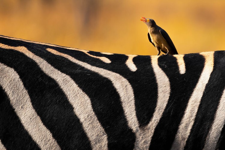 Jawara kontes foto hewan Agora