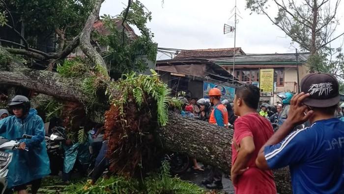Pohon tumbang di Cianjur.