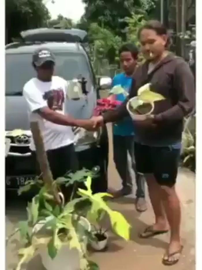 viral mobil dibarter tanaman hias