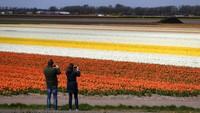 Liburan untuk melihat bunga tulip di Belanda merupakan kegiatan yang paling diincar oleh wisatawan dunia.