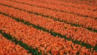 Perkebunan ini dikenal juga sebagai Taman Eropa yang merupakan salah satu taman bunga terbesar di dunia.