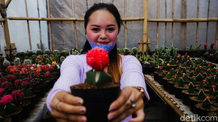 Berburu tanaman kaktus dan sekulen untuk dekorasi rumah