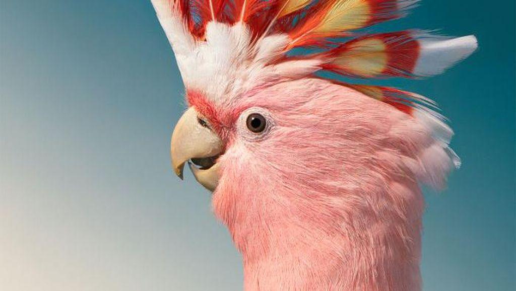 Potret Close Up Burung Langka yang Memukau