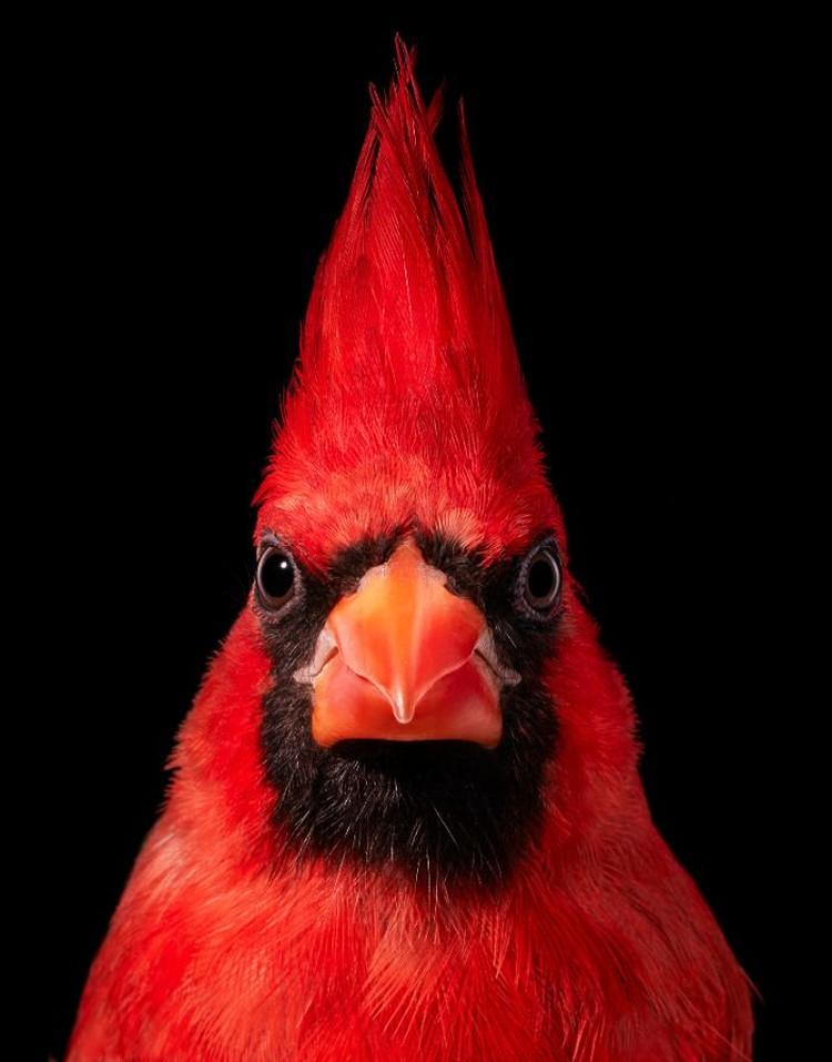 Foto portrait burung