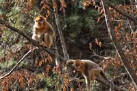 Mereka ditemukan di perbatasan Myanmar dan China. (Getty Images/iStockphoto)