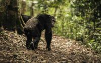 Foto: (Taman Nasional Gishwati-Mukura) Taman Nasional Gishwati-Mukura