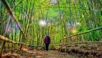 Hutan bambu ini pun bisa jadi lokasi selfie hits traveler. Agar enak dipandang, dan dijadikan spot foto yang menarik hutan bambu itu ditata dengan rapi oleh Dinas Pekerjaan Umum (PU) Kota Bandung dan dijadikan sebagai obyek wisata baru di Kawasan Bandung Timur.