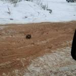 Jalur Kematian: Tulang Belulang Manusia Berserakan di Jalanan, Polisi Turun Tangan