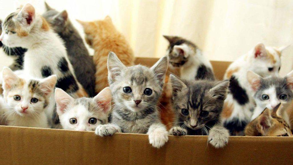 Lockdown Corona, Anak Kucing-Anjing Dijual Secara Tidak Bertanggung Jawab