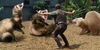 Akun bernama Things that are not aesthetic membagikan beberapa gambar di Facebook tentang Jurassic Park. Dia mengganti dinosaurus menjadi musang. (Things that are not aesthetic/Facebook)