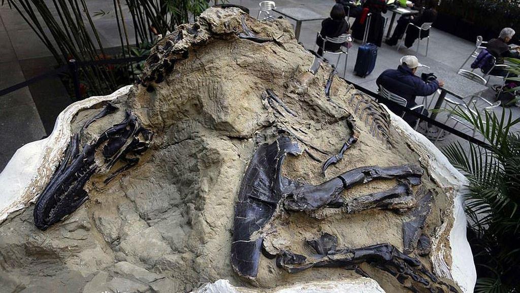 Fosil Super Langka Abadikan Duel Maut T-Rex dan Triceratops