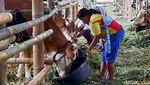 Penampakan Lokasi Pengungsian Hewan Ternak di Lereng Merapi