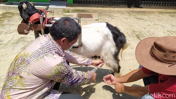 Untuk wisata edukasi, pengunjung biasanya akan mencoba memerah susu kambing etawa. Bahkan sebelum pandemi, turis dari mancanegara pernah datang ke Desa Ngargoretno. Mereka datang dari Belanda, Perancis, China, Jepang dan negara lainnya.