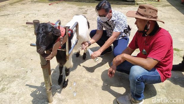 Wisata Edukasi Kambing Etawa Desa Ngargoretno