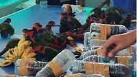 Burung Nuri Dimasukkan dalam Botol, KLHK: Tidak Berperikebinatangan!