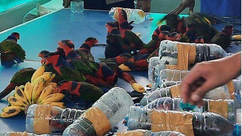 Suara burung nuri dari dalam botol gagalkan penyelundupan puluhan satwa yang dilindungi dari Papua
