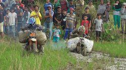 Keunikan Pesta Panen Masyarakat Desa Palatta